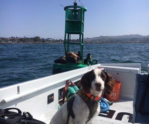 Dana Point Harbor Patrol